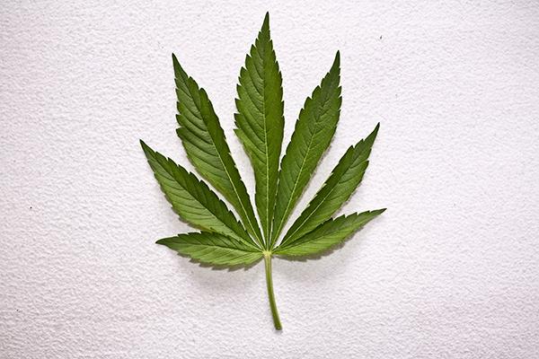weed0325no3