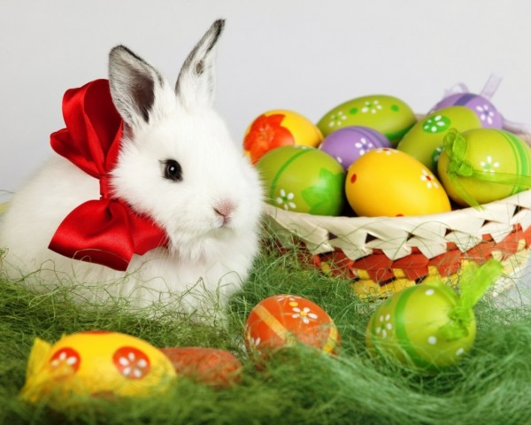 cute-easter-bunny