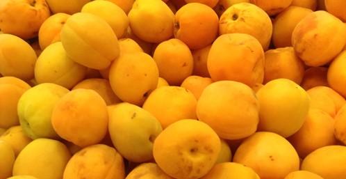 apricot0601no6