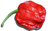 Hottest-Peppers9