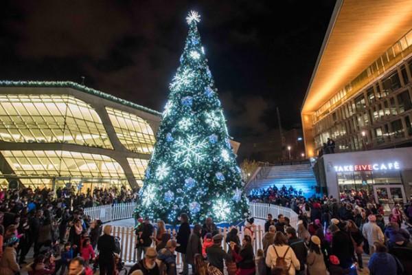 Surrey-Christmas-Tree