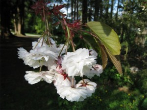 20080505_memorial_shirofugen_cutler_5648r-300x225