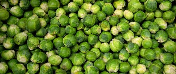 brussels-sprouts-22009_960_720-e1478903456903-1