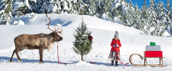 The Peak of Christmas @ Grouse Mountain | North Vancouver | British Columbia | カナダ