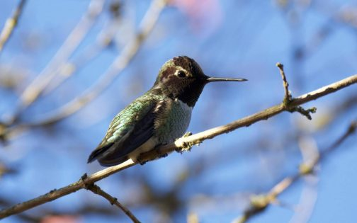 アース・デー/バード・ツアー(Earth Day Bird Tour)&グロウ・グリーン・ガイド・ツアー(Earth Day Grow Green Guide Tour) @ UBC Botanical Garden | Vancouver | British Columbia | カナダ