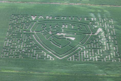 Bose Corn Maze(トウモロコシ畑の迷路 ) @ Bose Corn Maze | Surrey | British Columbia | カナダ