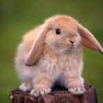 rabbit-150x150