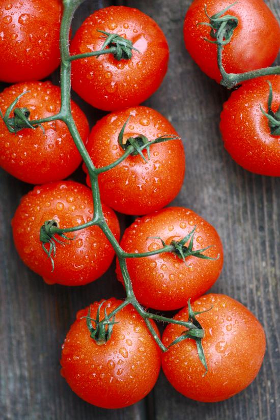 campari-tomato1208no1