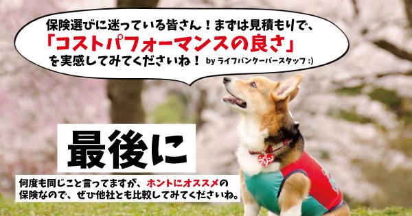 ライフバンクーバーおすすめ犬4